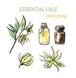 Insieme dell'olio essenziale del ylang Fotografie Stock