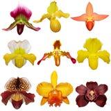 Insieme dell'orchidea Immagine Stock