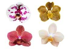 Insieme dell'orchidea Fotografie Stock