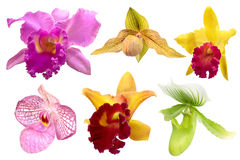 Insieme dell'orchidea variopinta isolato su fondo bianco Fotografia Stock Libera da Diritti