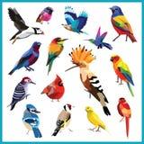 Insieme dell'uccello fotografia stock libera da diritti