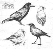 Insieme dell'uccello, illustrazione disegnata a mano Immagini Stock
