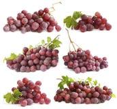 Insieme dell'uva Immagine Stock Libera da Diritti