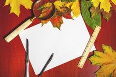 Insieme della cancelleria di autunno Foglie di acero ed elementi caduti della cancelleria Fotografia Stock Libera da Diritti