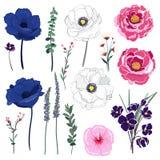 Insieme della cartolina d'auguri floreale selvaggia di estate con il giardino di fioritura f illustrazione vettoriale