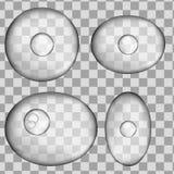 Insieme della cellula grigia umana isolata 3d Illustrazione realistica di vettore Modello per medicina e biologia illustrazione vettoriale