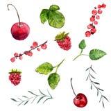 Insieme della ciliegia delle bacche dell'acquerello, ribes e lampone, foglie della menta e rosmarini Elementi di disegno di vetto illustrazione di stock