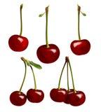 Insieme della ciliegia matura dolce Fotografie Stock