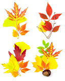 Insieme della composizione dei fogli di autunno differenti Fotografia Stock