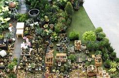 Insieme della decorazione della raccolta della pianta da appartamento del cactus Fotografia Stock Libera da Diritti