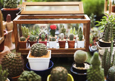 Insieme della decorazione della raccolta della pianta da appartamento del cactus Fotografie Stock Libere da Diritti