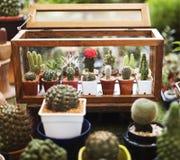 Insieme della decorazione della raccolta della pianta da appartamento del cactus Immagini Stock