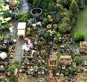 Insieme della decorazione della raccolta della pianta da appartamento del cactus Fotografia Stock