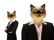 Insieme della donna di affari con Cat Head Fotografie Stock