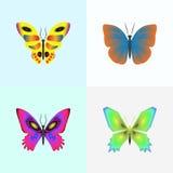 Insieme della farfalla Fotografie Stock
