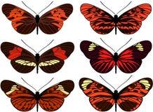 Insieme della farfalla isolata vettore Immagini Stock Libere da Diritti