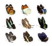 Insieme della farfalla isolato su bianco Fotografie Stock
