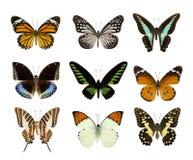 Insieme della farfalla isolato su bianco Fotografia Stock