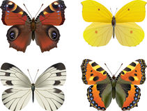 Insieme della farfalla realistica Immagini Stock