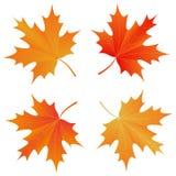 Insieme della foglia di acero di autunno Fotografie Stock Libere da Diritti