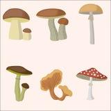 Insieme della foresta del fungo Fotografia Stock