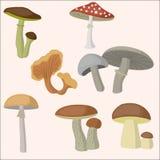 Insieme della foresta del fungo Immagine Stock