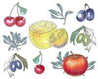 Insieme della frutta Fotografia Stock Libera da Diritti