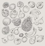 Insieme della frutta Illustrazione di disegno a mano libera Immagini Stock
