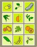 Insieme della frutta tropicale Immagini Stock