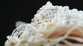 Insieme della massa delle conchiglie video d archivio