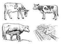 Insieme della mucca Immagini Stock