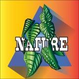 Insieme della natura Fotografia Stock