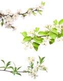 Insieme della pianta di fioritura Immagine Stock