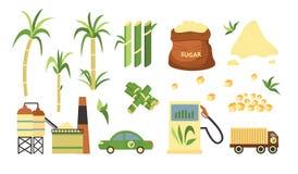 Insieme della pianta e dei prodotti della canna da zucchero, combustibile alternativo e polvere cubata e granulata della canna da illustrazione vettoriale