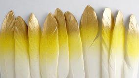 Insieme della piuma dorata dorata di rosa di giallo dell'oro isolata su fondo bianco Fotografia Stock