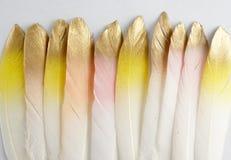 Insieme della piuma dorata dorata di rosa di giallo dell'oro isolata su fondo bianco Immagini Stock