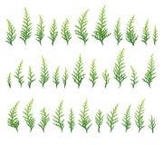 Insieme della priorità bassa dell'erba verde Fotografie Stock Libere da Diritti