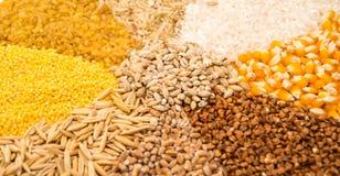 Insieme della raccolta dei chicchi di grano Fotografie Stock Libere da Diritti