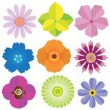 Insieme della raccolta dei fiori Fotografia Stock Libera da Diritti