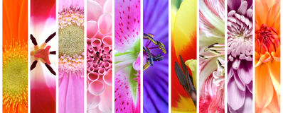Insieme della raccolta dei fiori della pianta Immagine Stock