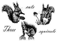 Insieme della raccolta del disegno degli isolati, tre piccoli scoiattoli svegli lanuginosi, schizzo, illustrazione disegnata a ma illustrazione di stock