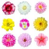 Insieme della raccolta del fiore variopinto Fotografia Stock Libera da Diritti