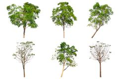 Insieme della raccolta dell'albero isolato su fondo bianco Fotografia Stock Libera da Diritti