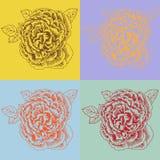 Insieme della Rosa Fotografie Stock Libere da Diritti