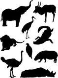 Insieme della siluetta degli animali selvatici del giardino zoologico Fotografia Stock Libera da Diritti