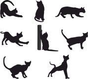 Insieme della siluetta del gatto Immagine Stock