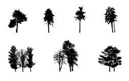 Insieme della siluetta dell'albero isolato su bianco Fotografia Stock Libera da Diritti