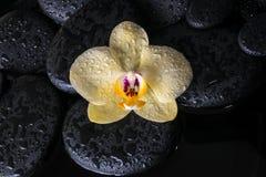 Insieme della stazione termale dell'orchidea gialla (phalaenopsis) sulle pietre di zen con le gocce Fotografie Stock Libere da Diritti