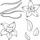 Insieme della vaniglia royalty illustrazione gratis