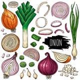 Insieme della verdura della cipolla Fotografie Stock Libere da Diritti